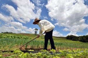 A Seleção Pública 05/2019 trata da contratação de estudos econômico e social destinada a executar as atividades da Meta 2 do Projeto de Apoio à Agricultura Familiar.