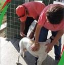 IFPB Campina vacina cães e gatos