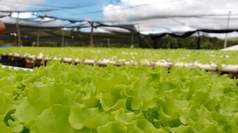 Atividade de Extensão na área de Agricultura Familiar foi realizada no município de Quixaba-PB