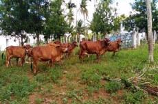 Pisoteio animal pode gerar, em situações mais graves, até a desertificação de áreas