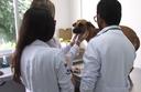 Especialização em Medicina Veterinária
