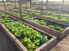 Tecnologia pode ser utilizada para o cultivo de hortaliças