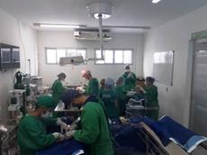 51 de cirurgias de castração foram realizadas em agosto