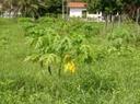 fruticultura 9