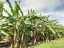 fruticultura 5